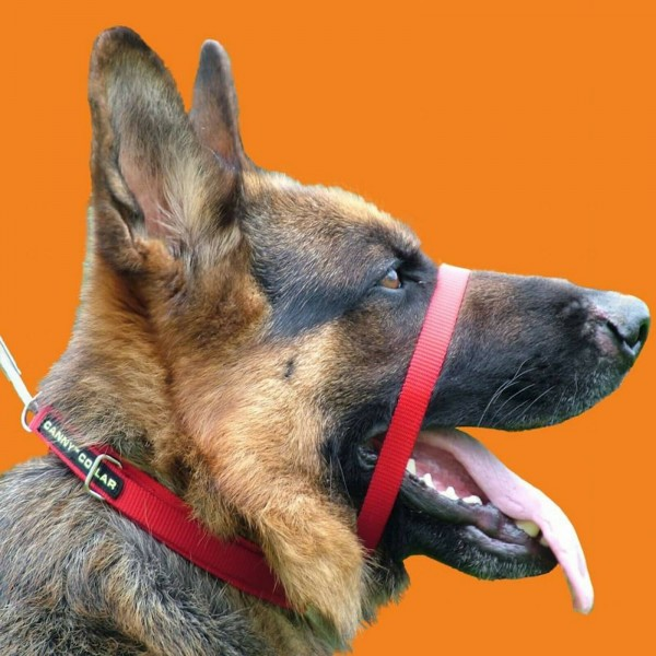 RED CANNY COLLAR BEST TRAINING COLLAR ON THE MARKET AUTHORISED SELLER